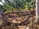 Bán Đất đường Hẻm cây số 3 QL27 - Liên Hiệp, Đức Trọng - Giá: 4.95 tỷ